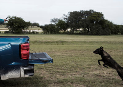 TACK9-personal-protection-working-K9-Belgian-Malinois-truck-attack-gallery