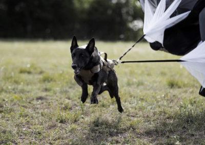 TACK9-personal-protection-working-K9-parachute-sprint-2-gallery