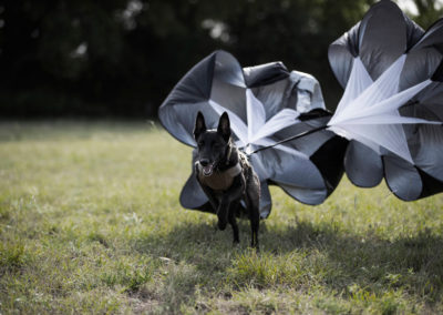 TACK9-personal-protection-working-K9-parachute-sprint-gallery